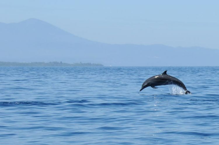 Lumba-lumba di Siladen