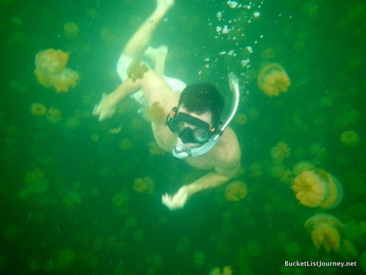 Ubur-ubur ramah di P Kakaban