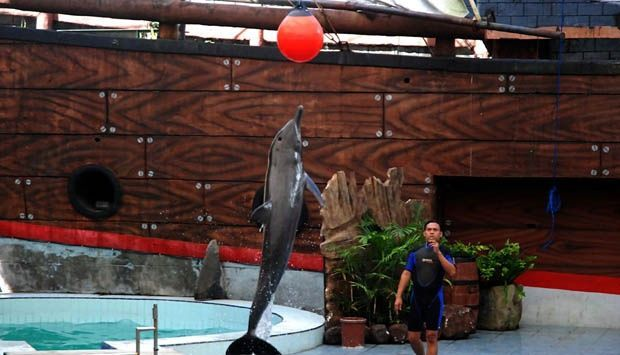 atraksi lumba-lumba harus dihentikan
