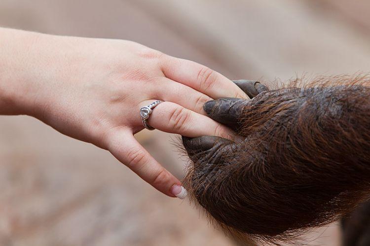 Berbagi dengan orangutan di Tanjung Puting