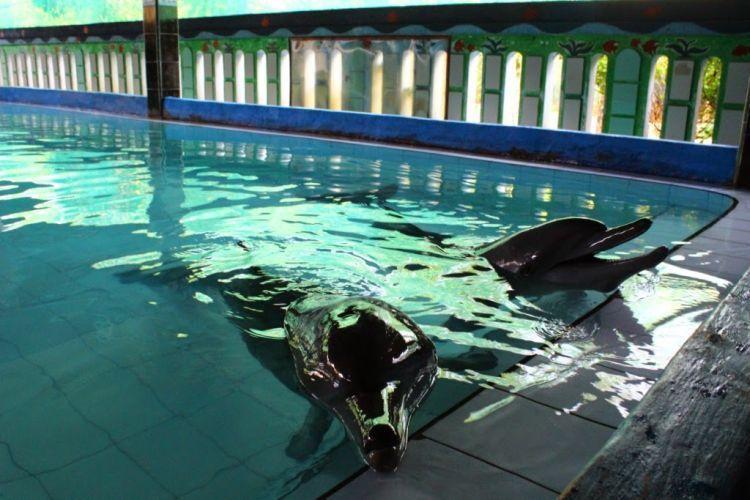 Lumba-lumba hidup di kolam yang sempit