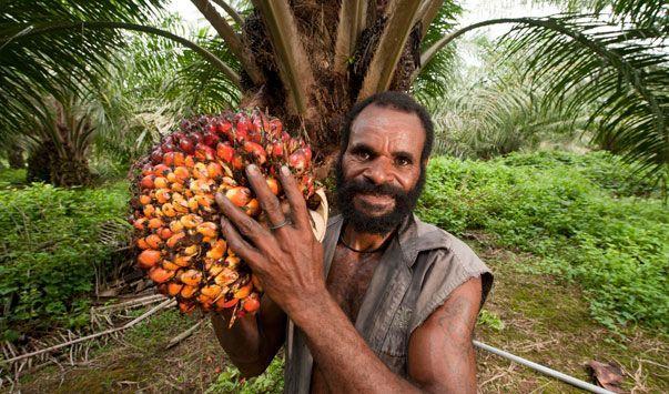 Sudah merambah ke Papua dan Papua Nugini