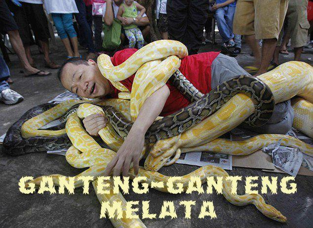 Melata-lata