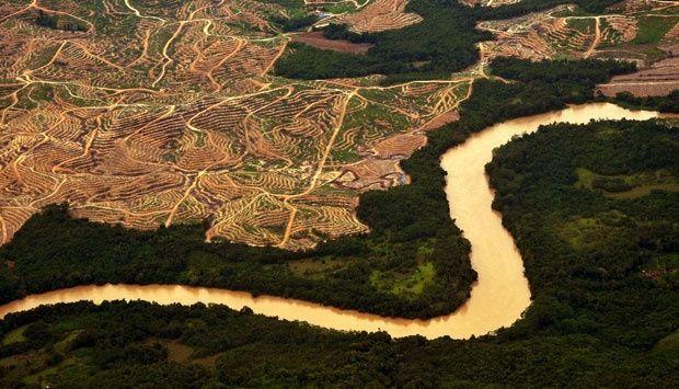 Rusaknya hutan akibat pembukaan kebun sawit