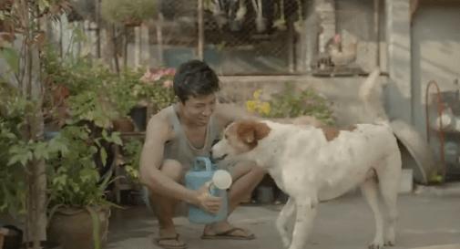 Anjing liar itu pun menjadi sahabatnya