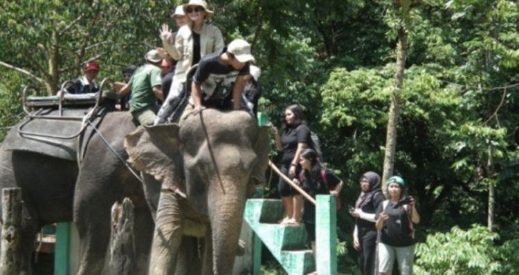 Menunggangi si Gajah (dok. pribadi)