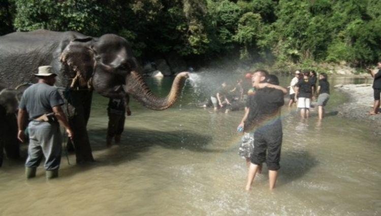 Konservasi Gajah. Elephant Bathing, Elephant Feeding & Elephant Riding (dok. pribadi)