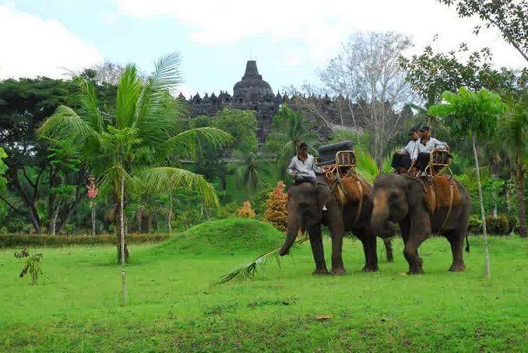 Naik gajah sambil berkeliling candi dan desa?