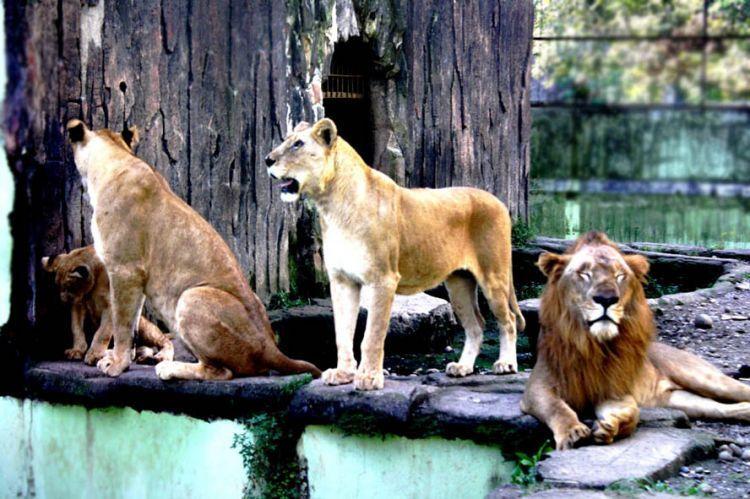 Taman Rekreasi Margasatwa Serulingmuas