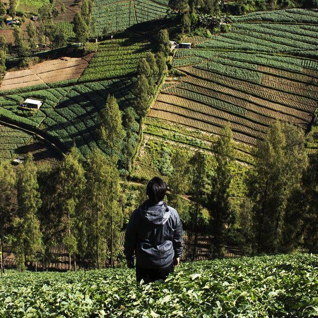 Pemandangan di Desa Ngadas