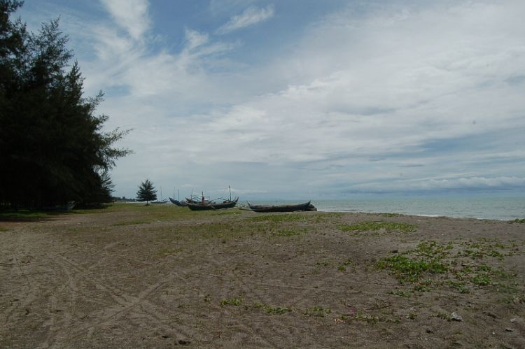 Pantai kata dengan hamparan pohon pinusnya
