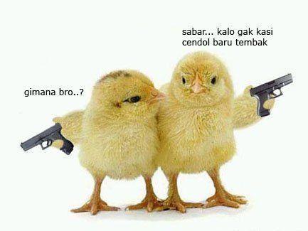 kenapa jadi ayam?