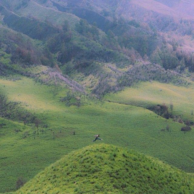 Lembah hijau Bromo