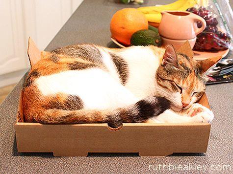 manfaat kotak pizza sebagai rumah kucing