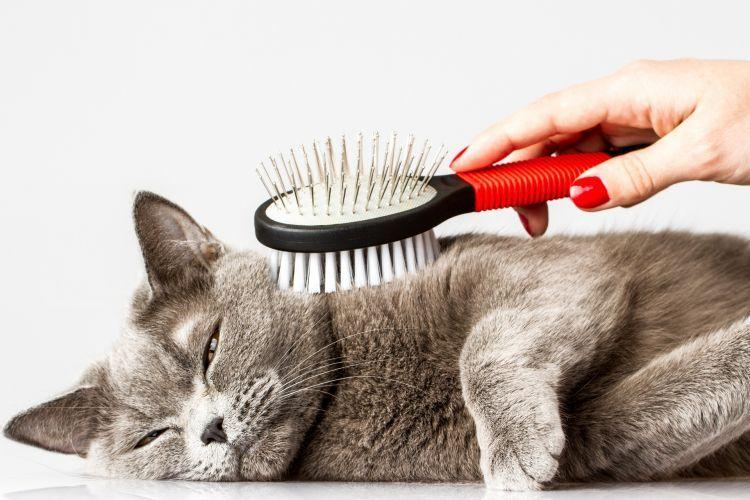 Melakukan perawatan kucing secara berkala