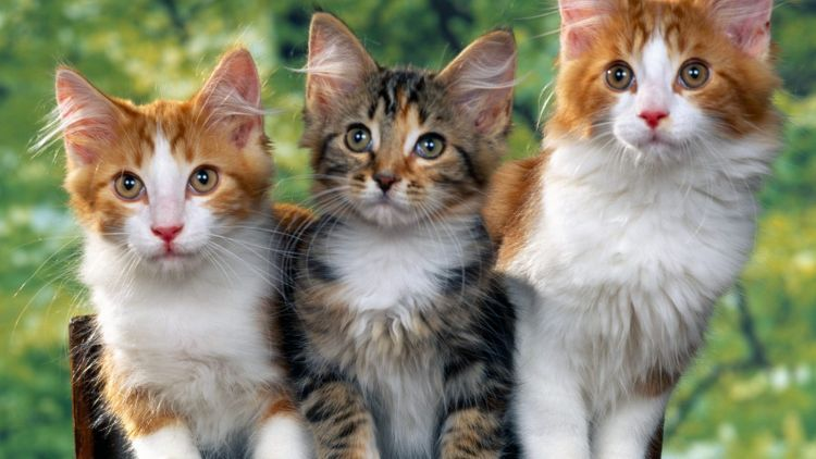 9 Arti Bahasa Tubuh Kucingmu yang Memberimu Petunjuk Soal