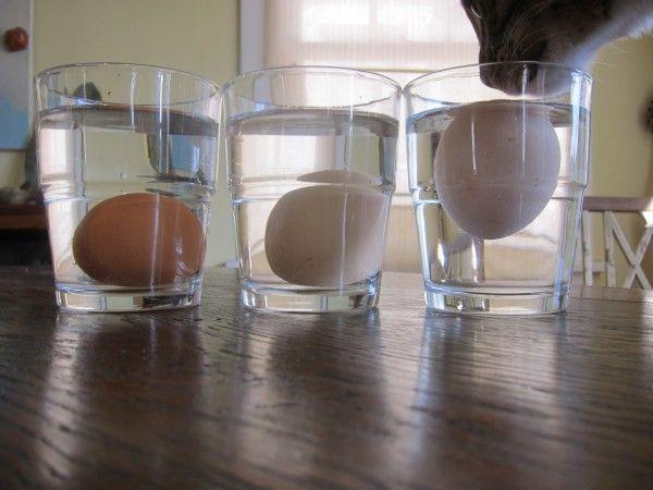 Cara mengetes telur yang segar