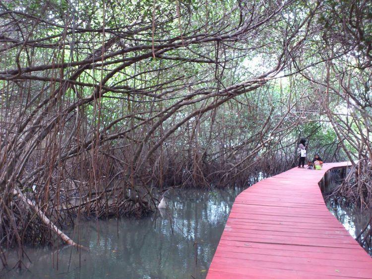 Hutan Mangrove Pasarbanggi