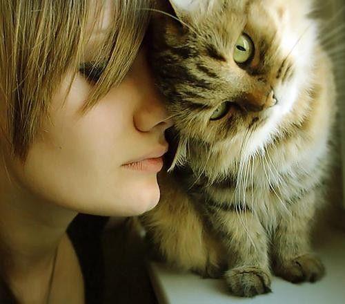 Hidup bareng kucing