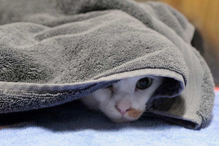 Download 100+  Gambar Kucing Lucu Ada Kata Kata Paling Baru