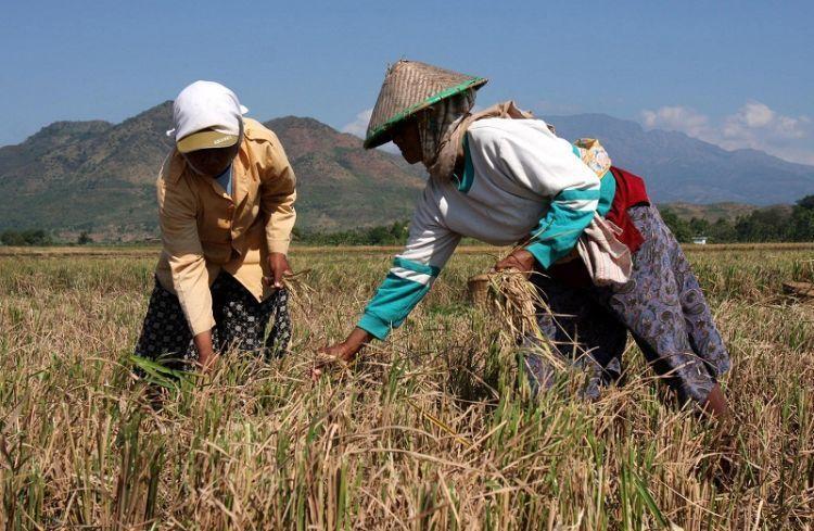 Petani yang menghasilkan