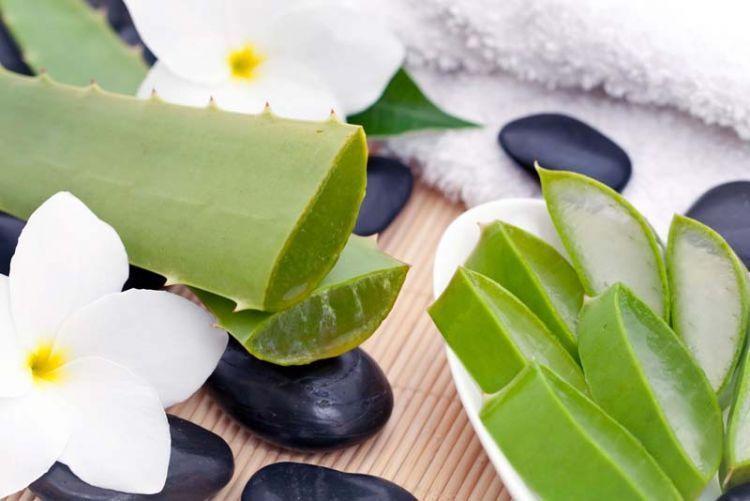 The-Aloe-Vera-Benefits-1