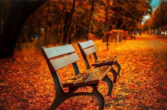 bench-forest-trees-path-large