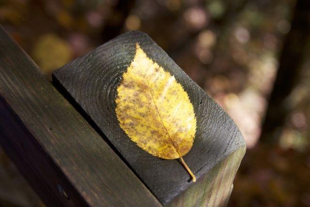 leaf-fall-foliage-large