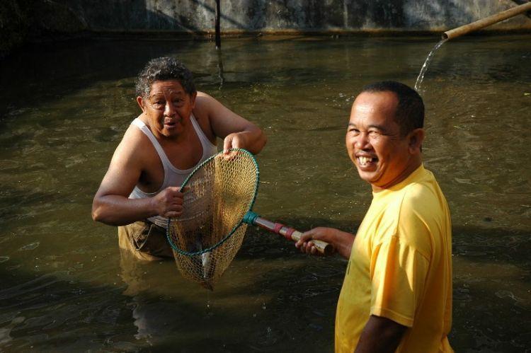 Kangen ikan di kolam