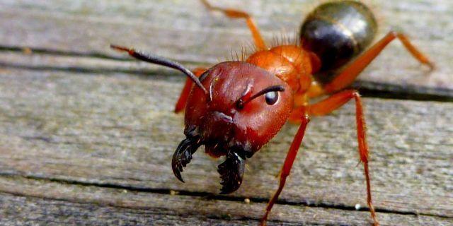 entomologist
