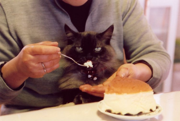 Kucing manja