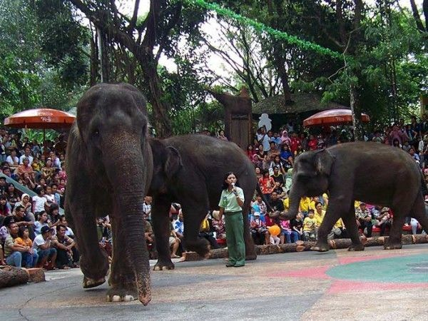Melihat pertunjukan gajah