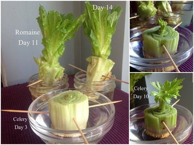 Memanfaatkan sampah organik dan cara menaman sayuran