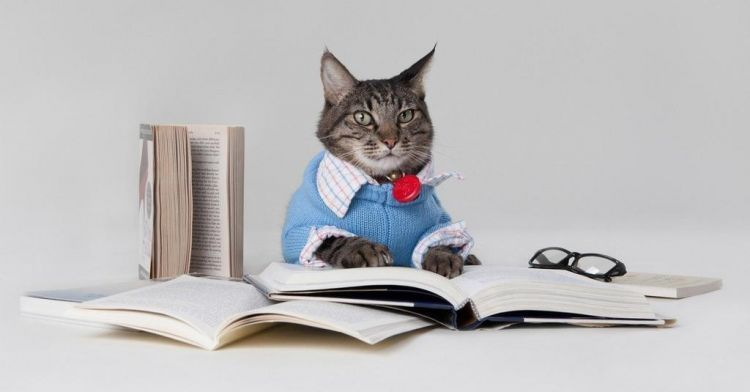 Kucing cerdas