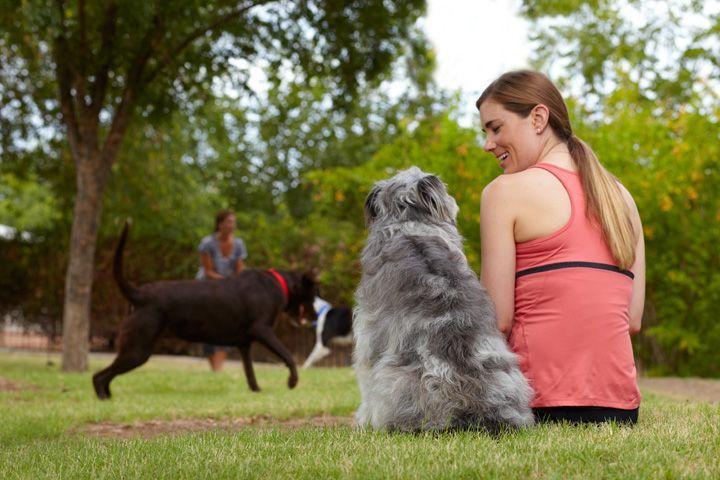 Anjing sahabat manusia