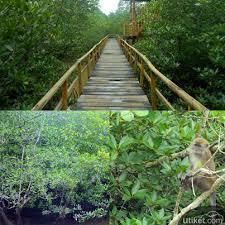Mangrove Sei Carang