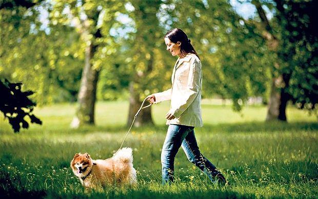 Anjing di taman
