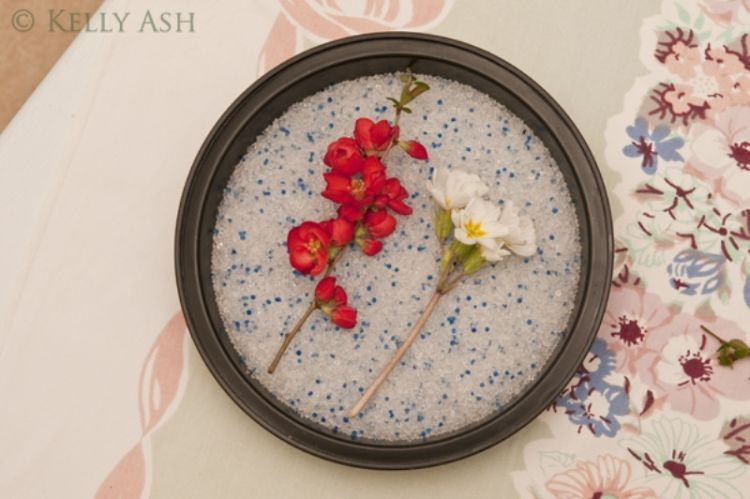 Cara mengawetkan bunga dengan silika gel