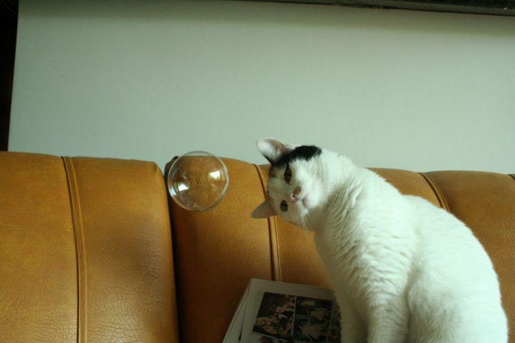 Kucing penasaran