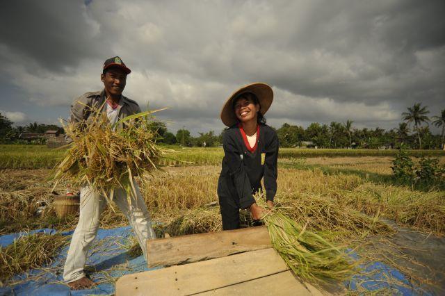Petani di Indonesia