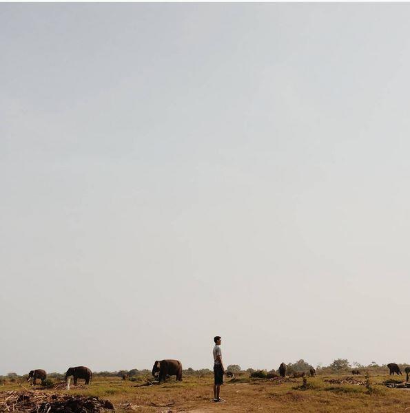 bergumul dengan gajah di Way Kambas.