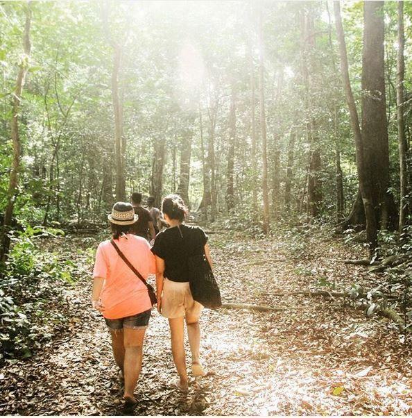 Hutan Peucang, Ujung Kulon
