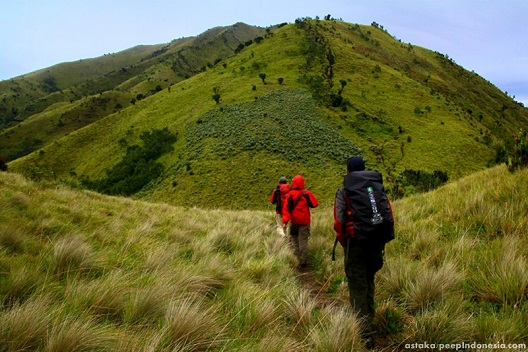 Sabana Gunung Merbabu.