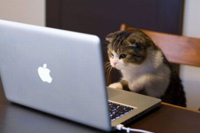 tuh, kucing aja ngeblog