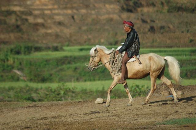 orang menggunakan kuda sebagai alat transportasi