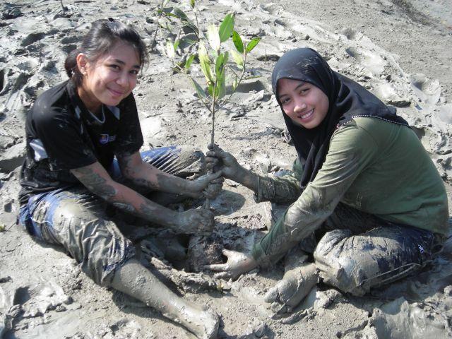 Mangrove Replant GEC