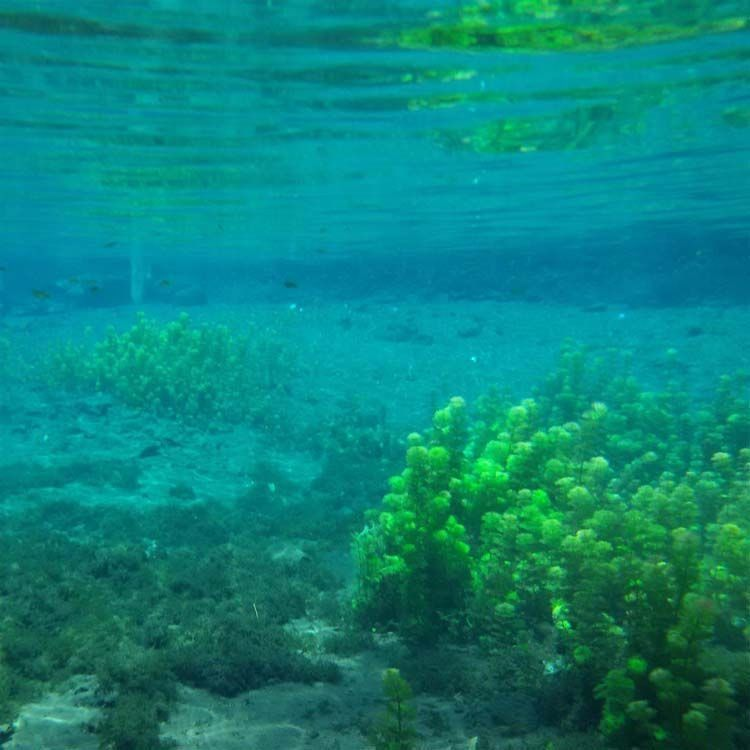 Pemandangan bawah air yang asri dari sumber sirah.
