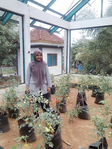 Green House UMK