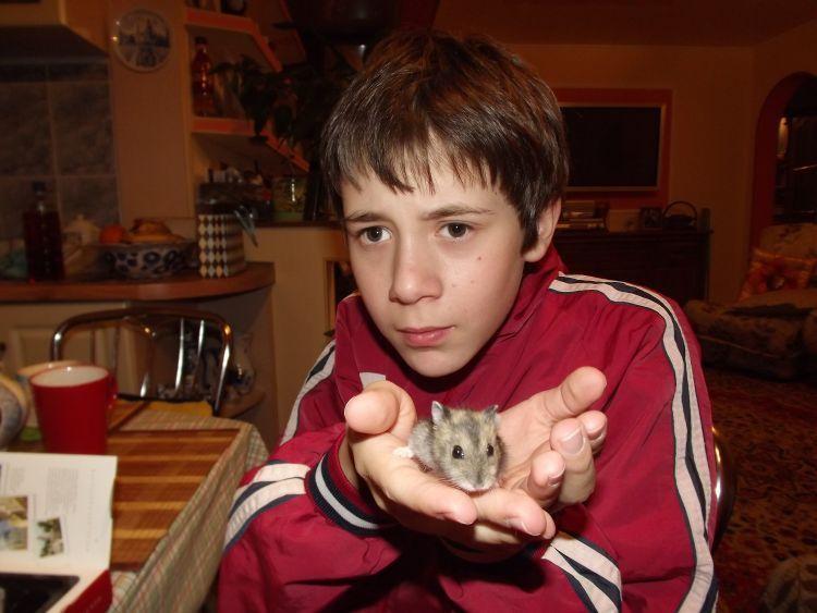 hamster bisa stress kalau diajak berdiri