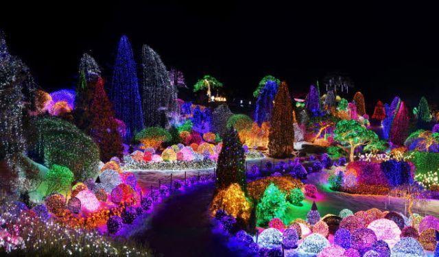 Garden of Morning Calm saat Lighting Festival, seperti di dunia dongeng